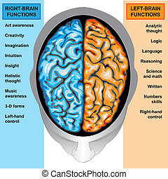 Human brain left and right function - IIlustration body...