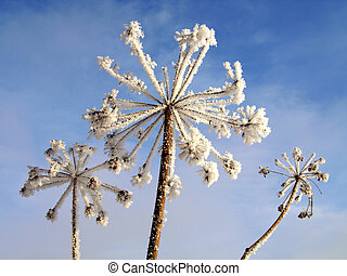 Ice covered dry flowers with deep blue sky