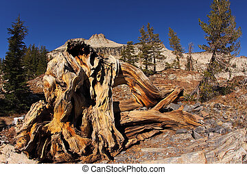 Picturesque stumps and snags - Picturesque tree stumps and...