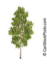 tree birch shadow cg