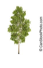 tree birch shadow cg