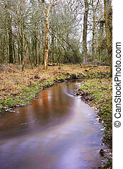 Vibrant forest scene Winter Autumn Fall colors with stream flowing through centre