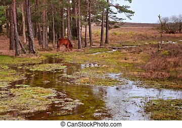Wild pony on edge of forest and flooded swamp land in Winter