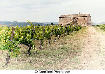 Tuscany vineyard - Chianti vineyard landscape in Tuscany,...