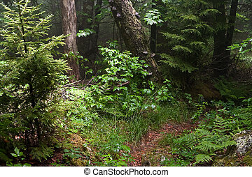 Appalachian Trail - Early summer scene in the Smokey...