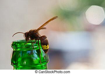 Wasp on bottleneck - Wasp on the green bottleneck