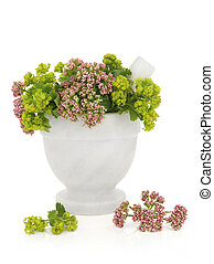 Valerian and Ladys Mantle Herbs - Valerian and ladies mantle...