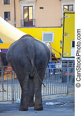 Elephant - Photo of an Elephant in the city