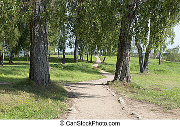 Foot path in park - Foot path between birches in the park....