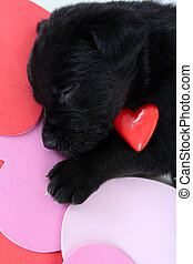 Black puppy - Cute black puppy with red ceramic heart