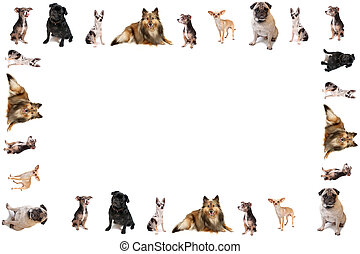 Dog border or frame - Different breeds of dog like...