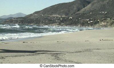 dog running on italian beach
