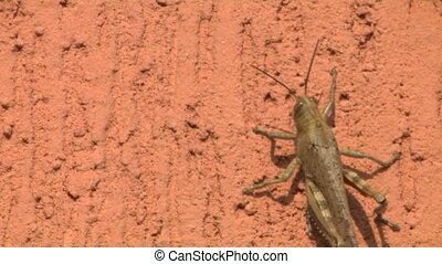 grasshopper 02 - Grasshopper