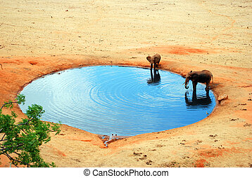 An elephant in the water hole in Tsavo-East Nationalpark