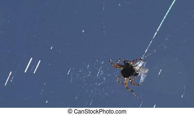 spider 01
