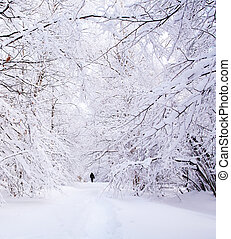 Path in a winter deep forest - trees covered with snow and a...