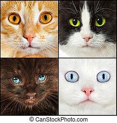 cat close up - Portrait of a cats close up
