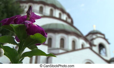 Temple of St Sava, Belgrade - Temple of St Sava - purple...