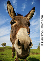 Loveable donkey - Friendly donkey with sunny natural...