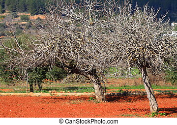 Red cultivated field in Ibiza, Balearic Island, Spain