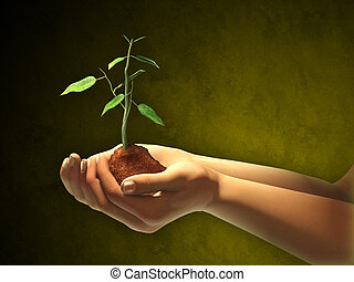 New life - Female hands holding some soil and a seedling....