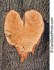 Heart shape in a Tree - A heart shape left after cutting a...