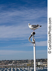Sea gull watching a surveilance camera - A sea gull perched...