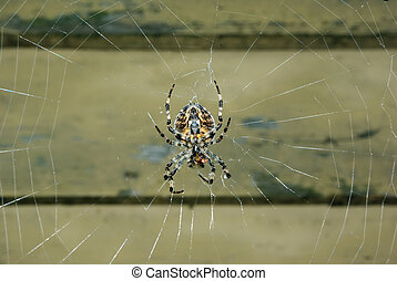 Spider on her web - A spider sitting in the center of her...