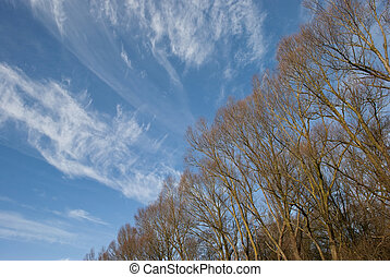Treetop before blue sky with clouds