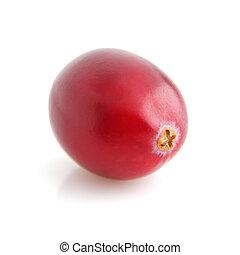 One cranberry in closeup