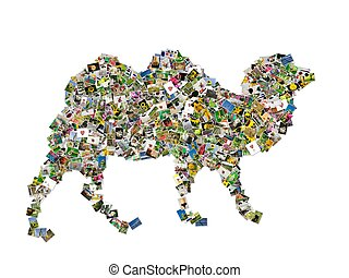 Camel symbol - Camel symbol, photos collage isolated on a...