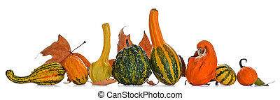 Gourds - Bunch of gourds of different color and shape