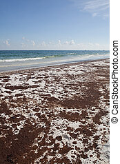 "Oil Spill on the Beach June 2010 - Called ""the world's..."