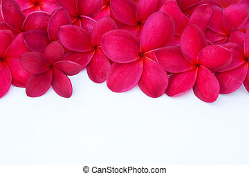 Red Plumeria Frangipani Flower for Spa and Wellness Concept...