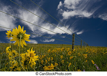 Yellow flowers and fence