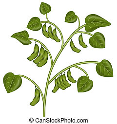 Soybean Plant - An image of a soybean plant