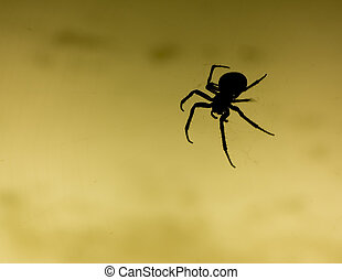Scary Spider - Silhouette of a scary black spider
