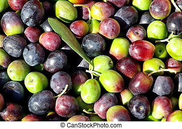 Texture of the green and red olives.