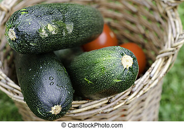 zucchini - fresh picked zuchini and tomatoes in basket