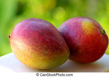 Two mangoes fruits are isolated on green background