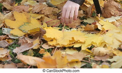 Gathering maple leaves - Tilt up of young woman gathering...