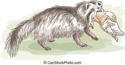 Raccoon with a bird. Vector illustration.