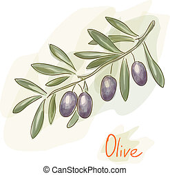 Branch of black olives. Watercolor style.