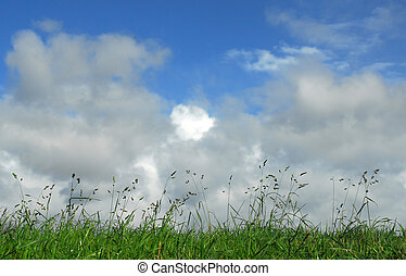 Heaven and Earth - grass and blue sky with great clouds