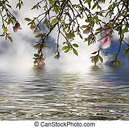 sky, water and flowers - flowering tree reflected in water