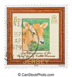 jersey cow - Mail stamp printed in Jersey featuring a cattle...