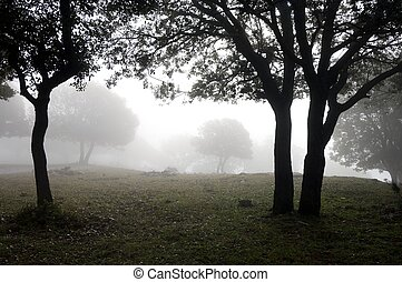 through the fog - forest of oak through the fog in Vilanova...
