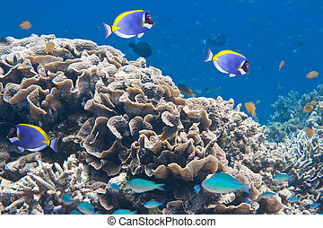 Indian ocean Underwater world