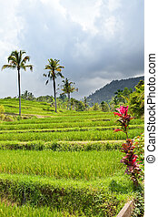 Tropical plants on a hill slope, Indonesia Bali
