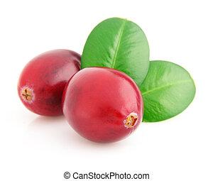 Ripe cranberry in closeup